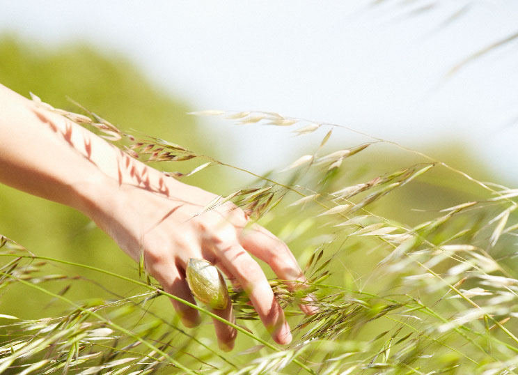a hand picking wheat in a field
