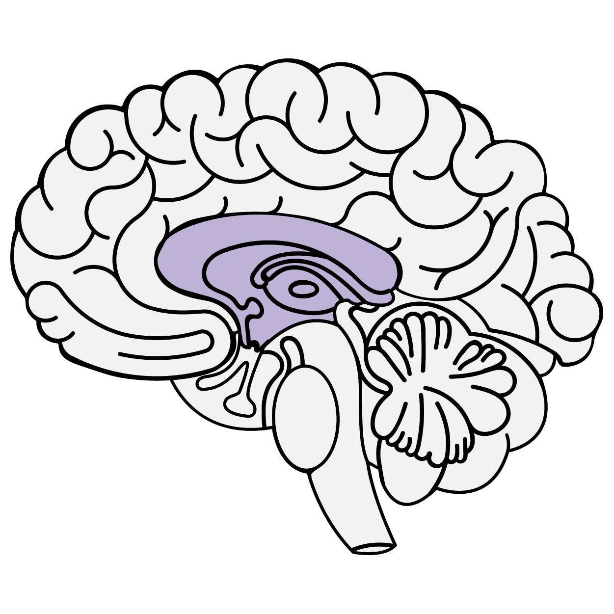 The Limbic System Diagram
